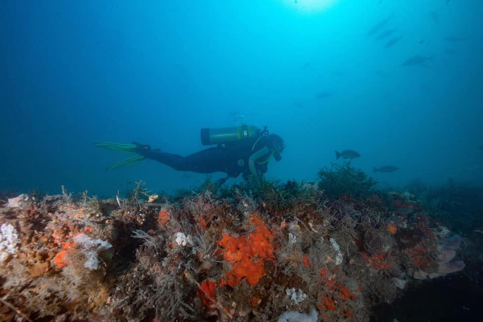 School of Biological Sciences researcher Nastassia Patin dives near a blue hole off Florida's western coast.
