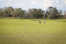 Research on the salt marsh of Sapelo Island, Georgia (Courtesy of UGA)