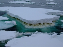 Sea ice in Antarctica showing a brown layer of ice algae (Credit Rick Cavicchioli)