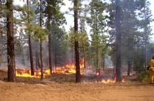 Controlled Wildland Burn